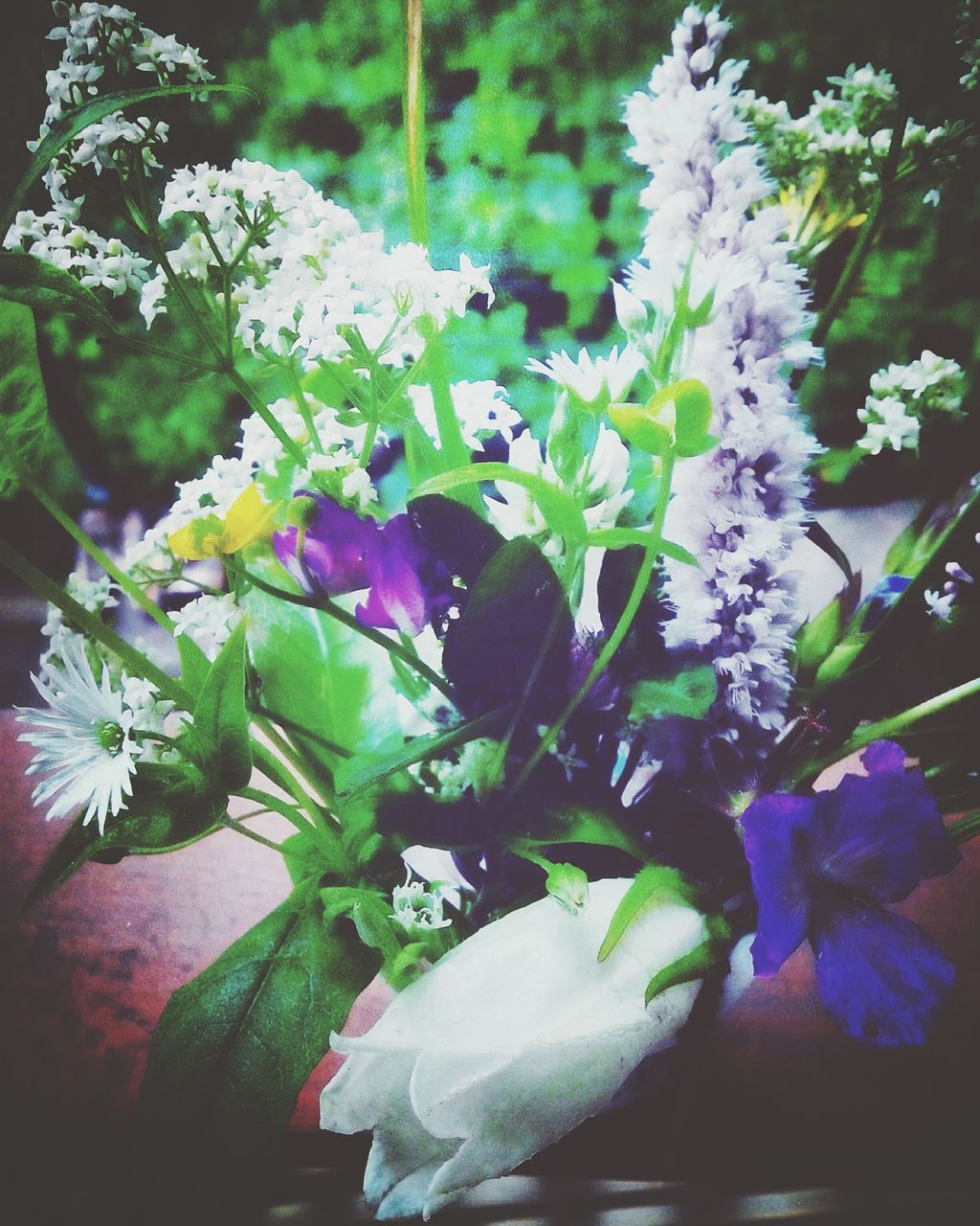 flower, nature, growth, plant, beauty in nature, blossom, purple, petal, fragility, no people, freshness, spring, blooming, close-up, outdoors, day, flower head