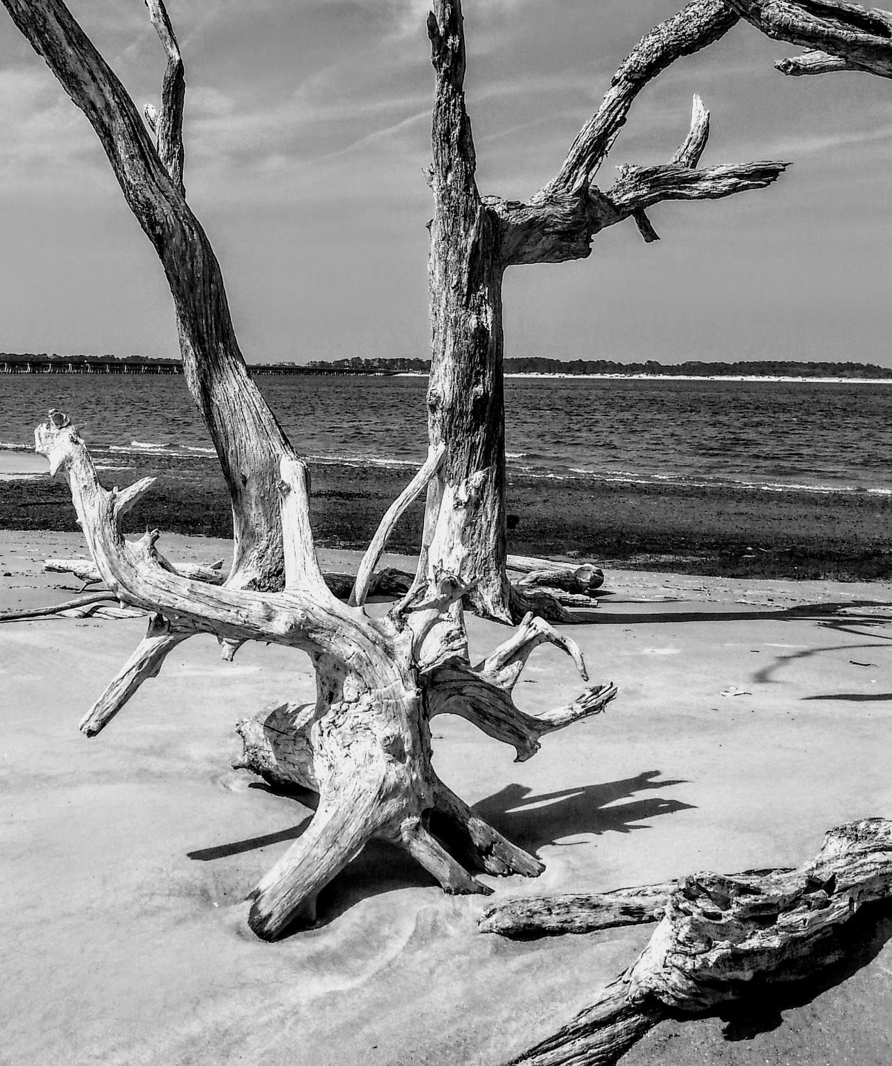 Outside Photography Drift Wood On Beach peaceful bw gray sand water hiding spot clarity alone