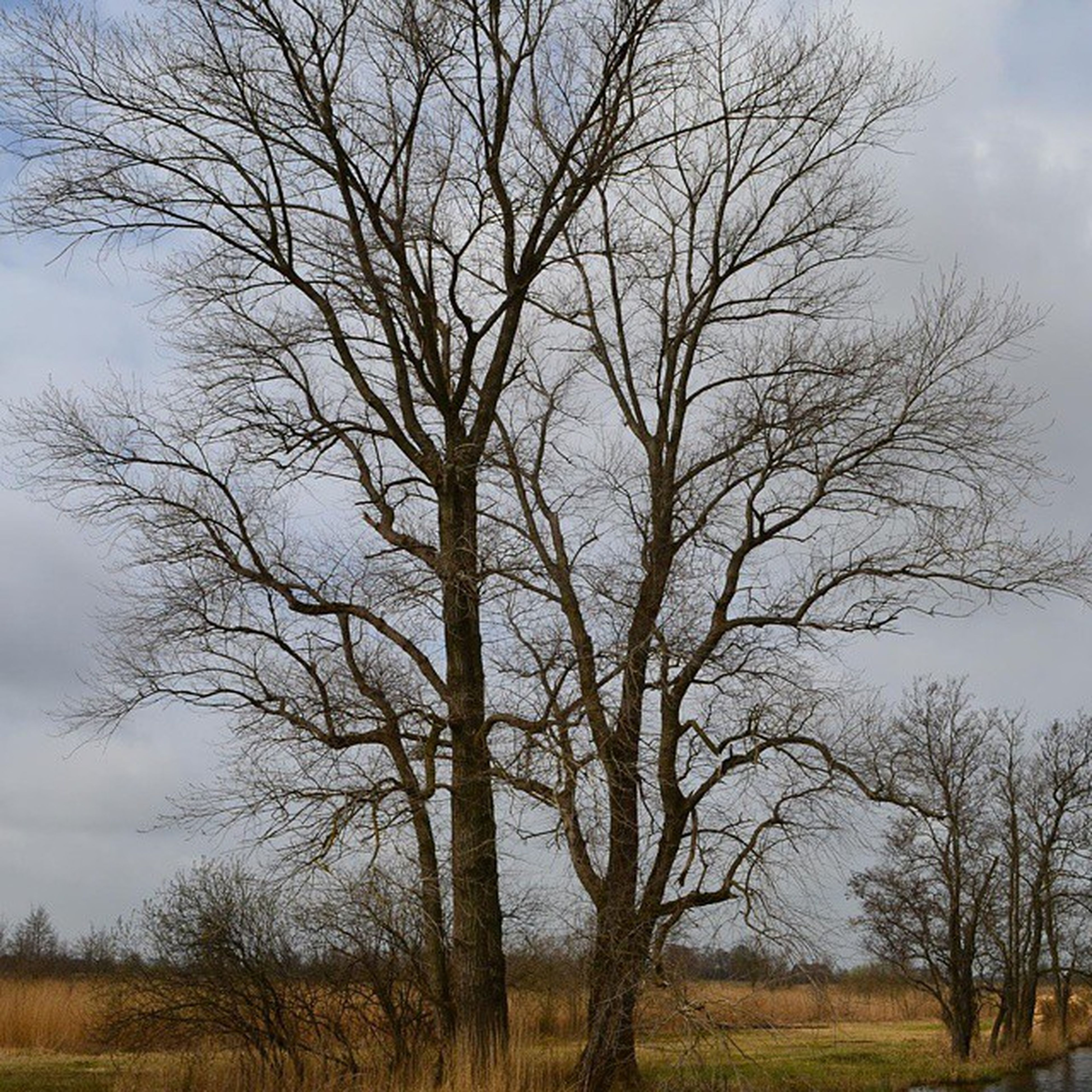 bare tree, tree, sky, branch, tranquility, tranquil scene, field, landscape, scenics, nature, grass, beauty in nature, tree trunk, cloud - sky, non-urban scene, growth, cloud, outdoors, no people, day