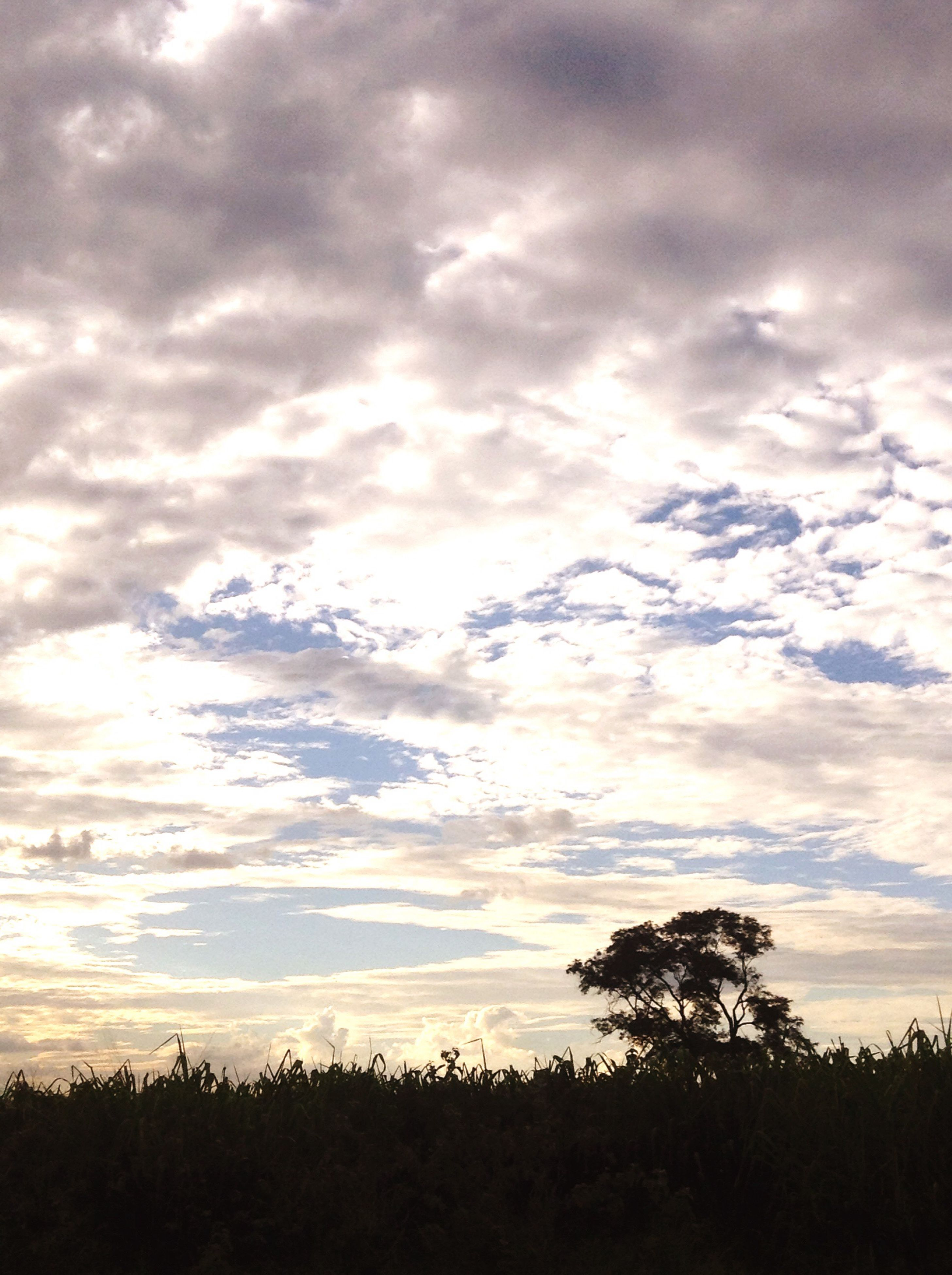 sky, cloud - sky, nature, sunset, beauty in nature, silhouette, scenics, tranquil scene, outdoors, idyllic, tranquility, no people, dramatic sky, growth, landscape, tree, freshness, day