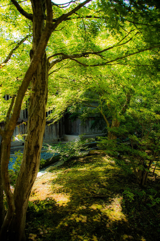 Fresh Freshness Green Green Green Green!  Japan Photography Japanese Style Leafs The Trees