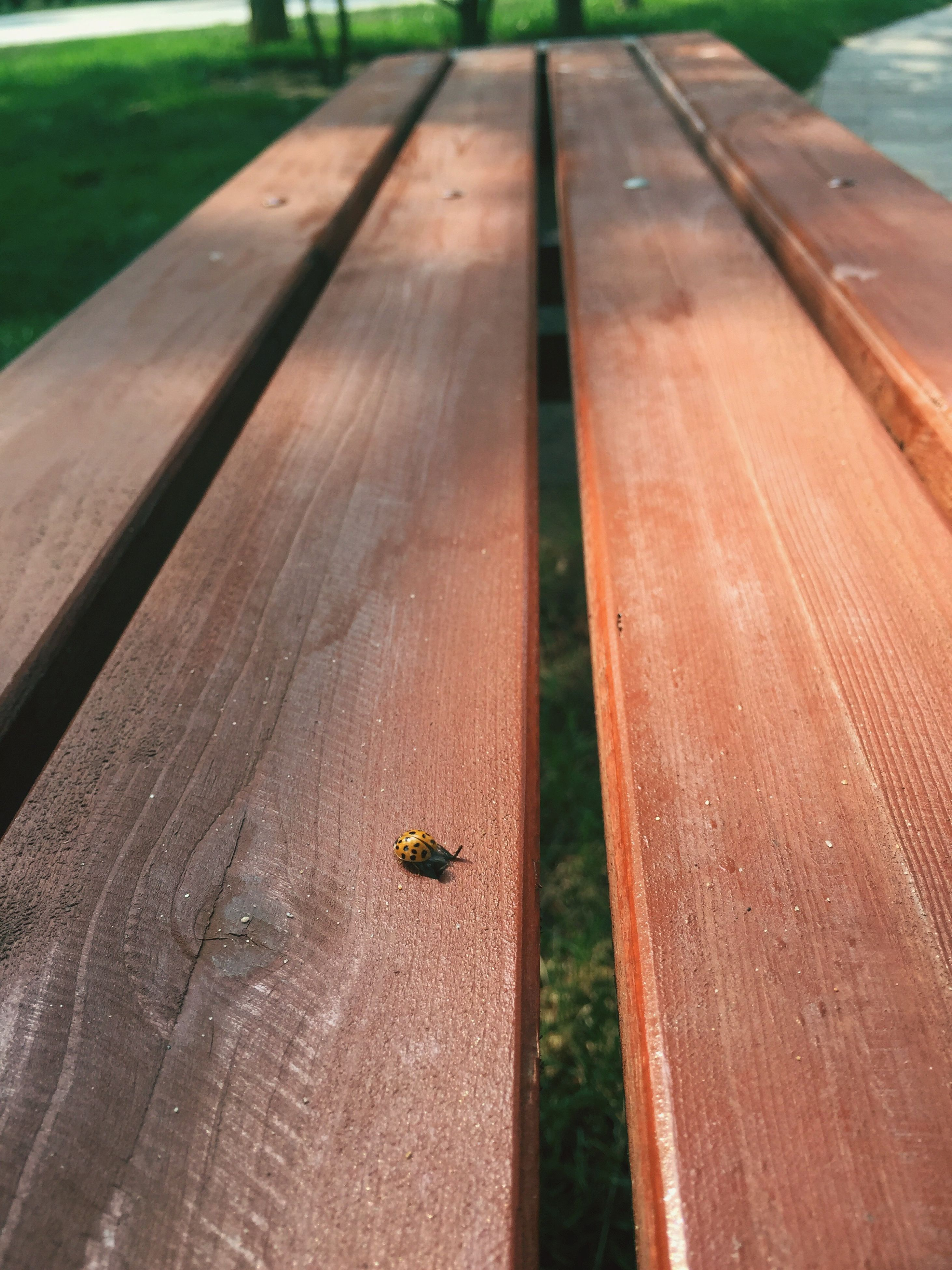 insect, wood - material, wooden, day, outdoors, nature, selective focus, no people, close-up, focus on foreground, animal wildlife, green color, elevated view, beauty in nature