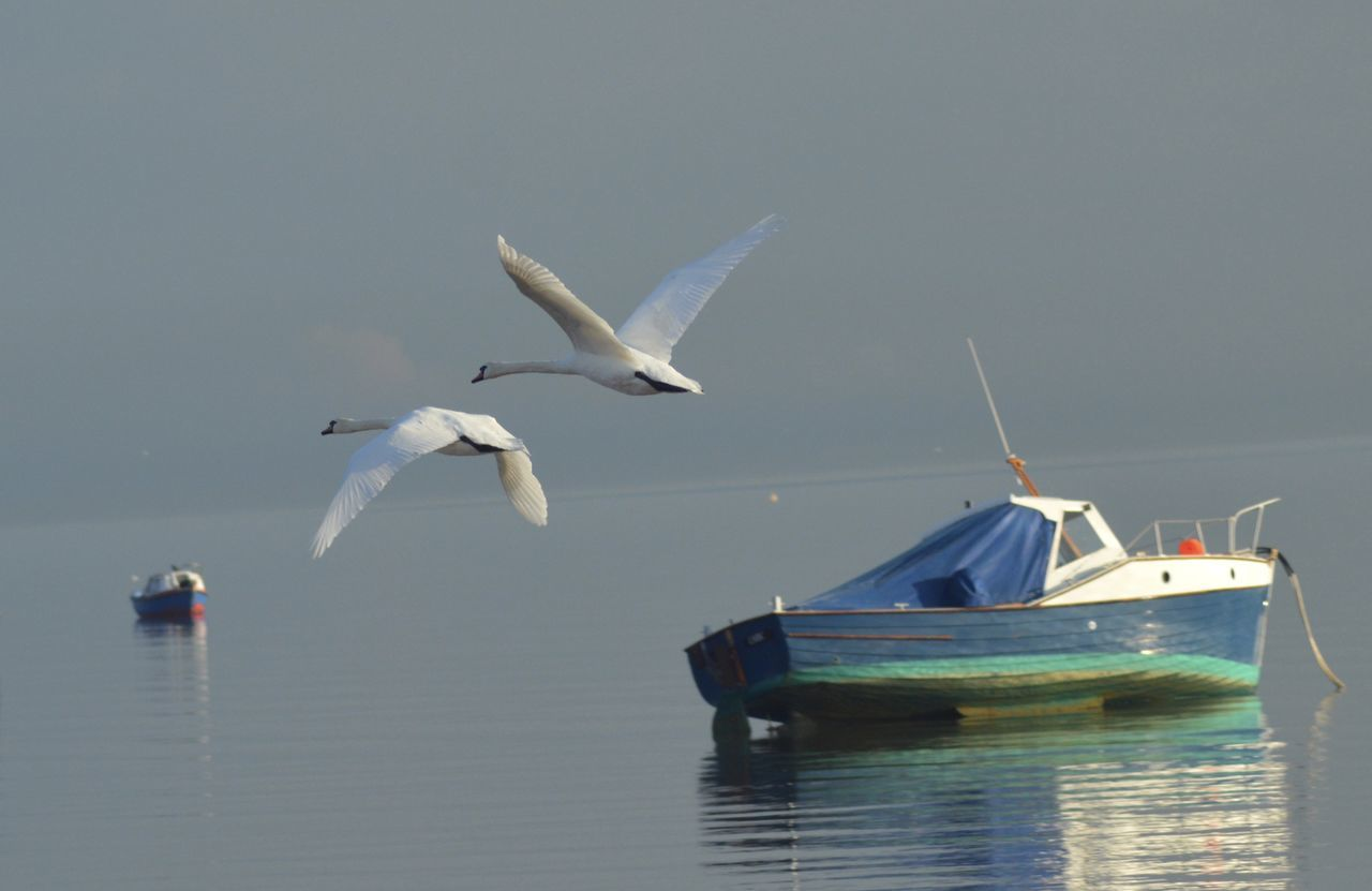 Nautical Vessel Flying Bird Transportation Sky No People Outdoors Animal Themes Southend On Sea Beach Autumn Day Animals In The Wild Water Sea Boats And Moorings