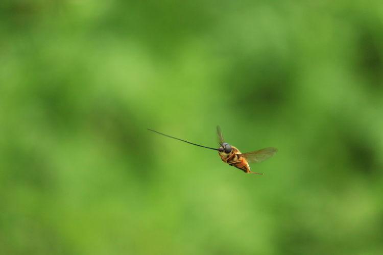 Flying Needle..