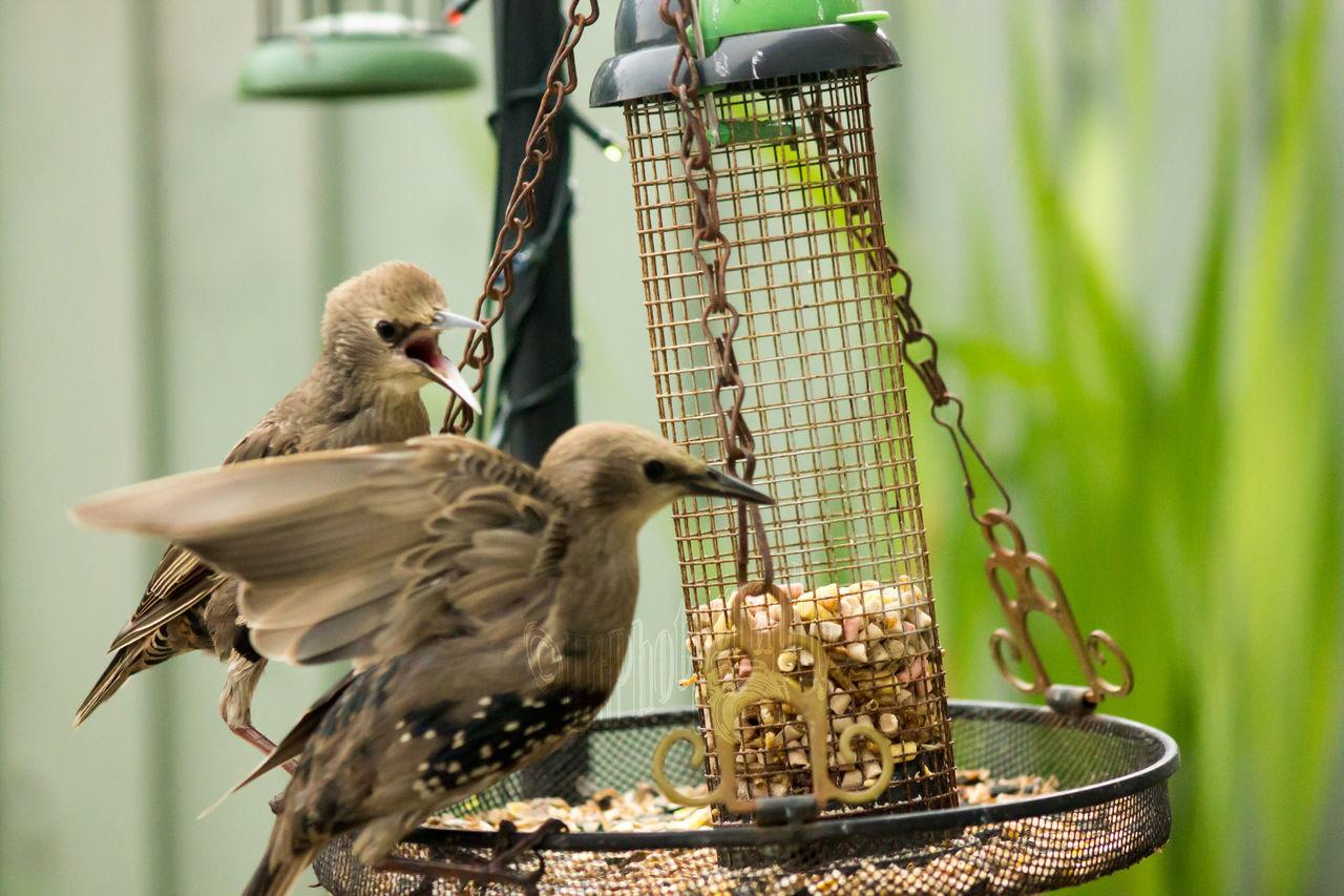 feeding time. #bicycle #space #hello World #birds #starlings #starlings #bird #starlings #birds