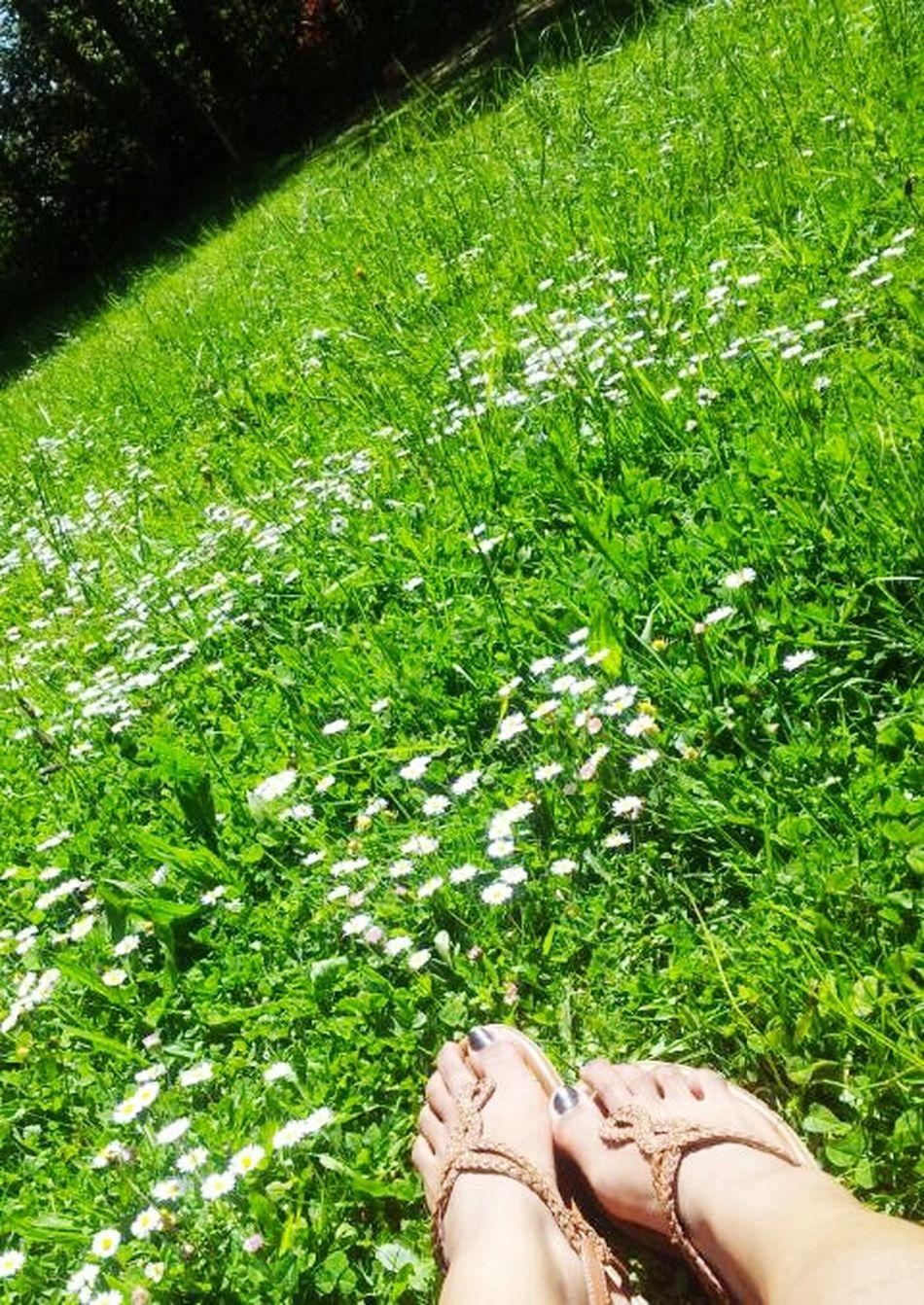 Relaxing Summer Vibes 😊 Enjoying Life Sunrise Grass Daisies Nature