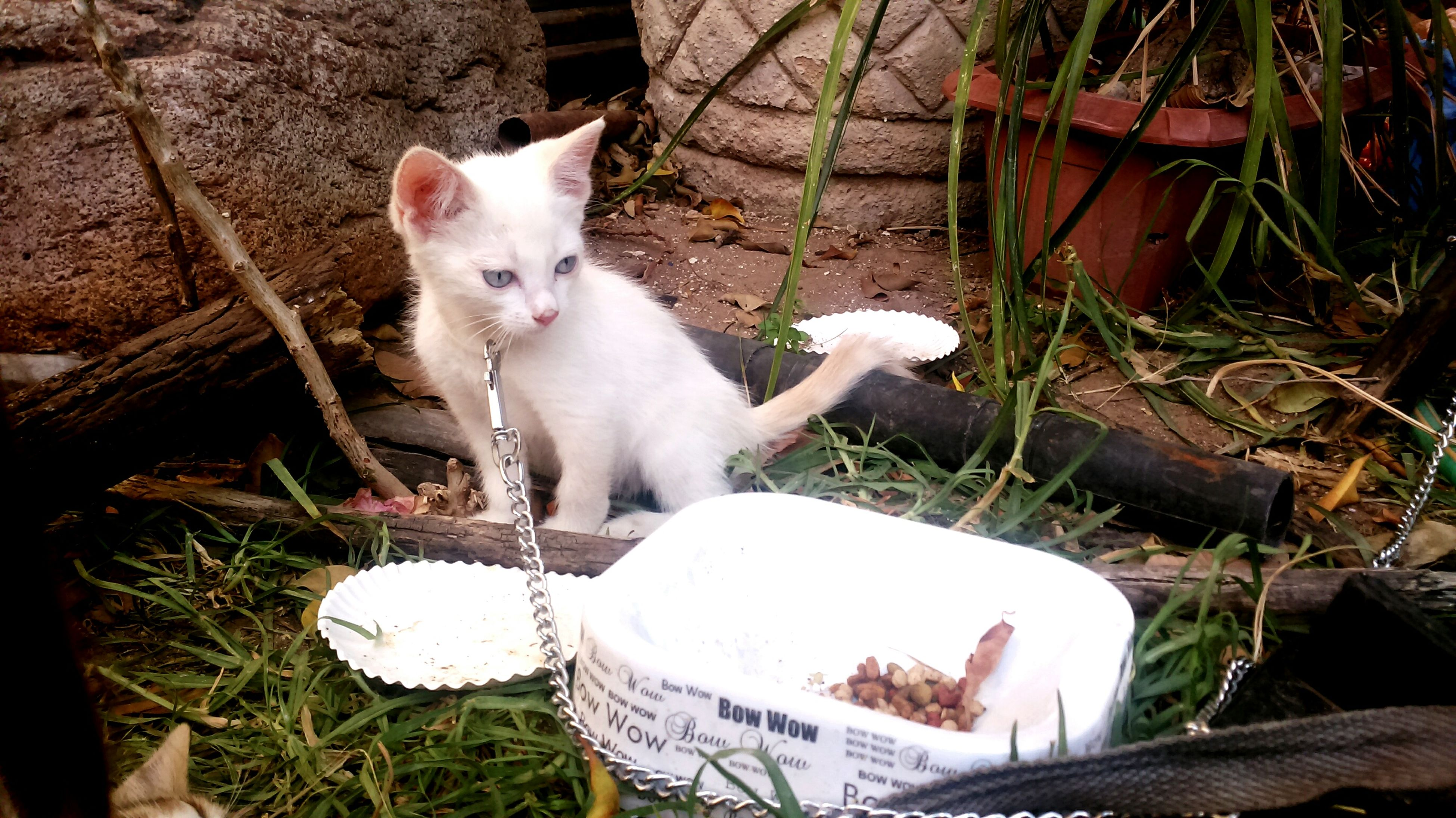 domestic cat, pets, feline, mammal, domestic animals, animal themes, cat, one animal, white color, sitting, no people, portrait, day, outdoors, kitten