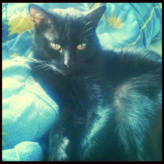 Kiciuch :) Cat My Kitty