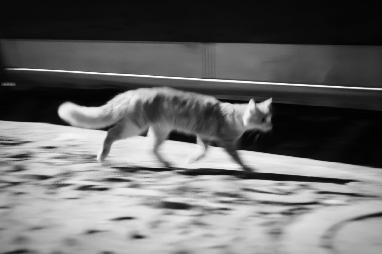 domestic cat, animal themes, one animal, pets, cat, feline, domestic animals, mammal, selective focus, indoors, no people, day, full length, close-up