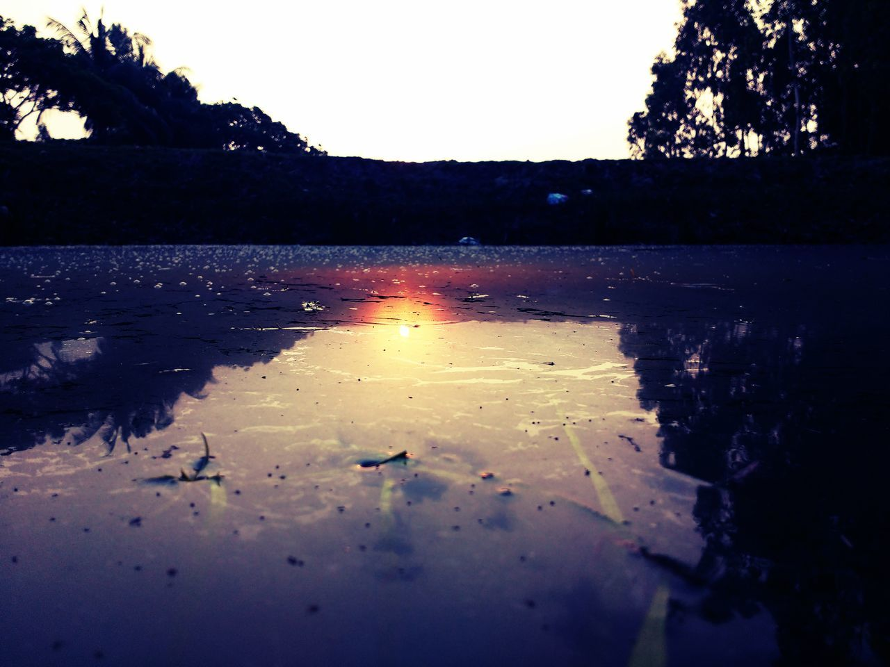 reflection, water, tree, no people, tranquility, nature, tranquil scene, silhouette, scenics, lake, outdoors, sunset, puddle, beauty in nature, sky, day, close-up