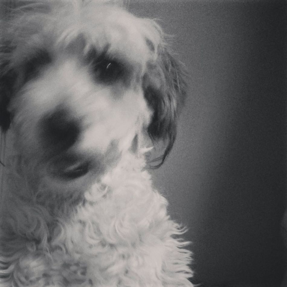 Pet Photography  Pet Love I Love My Dogs❤️ My Dogs Are Cute ! Pet Portrait