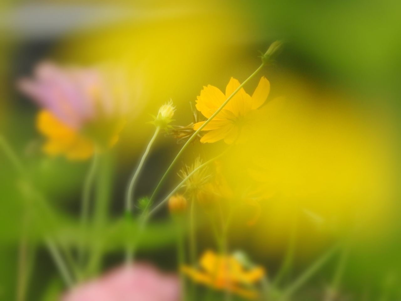 flower, nature, yellow, growth, fragility, plant, beauty in nature, selective focus, close-up, green color, no people, freshness, grass, outdoors, flower head, day
