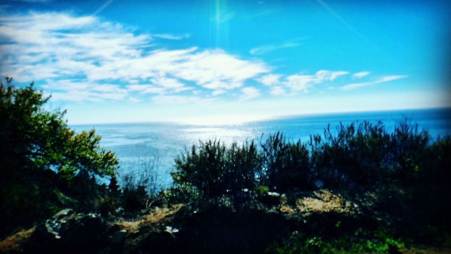 Sky Nature Sea Water Scenics Horizon Over Water Beauty In Nature Vegetation Landscape Tree Outdoors No People Scenery Day (null)EyeEm Team Big Sur EyeEm USA USA Photos