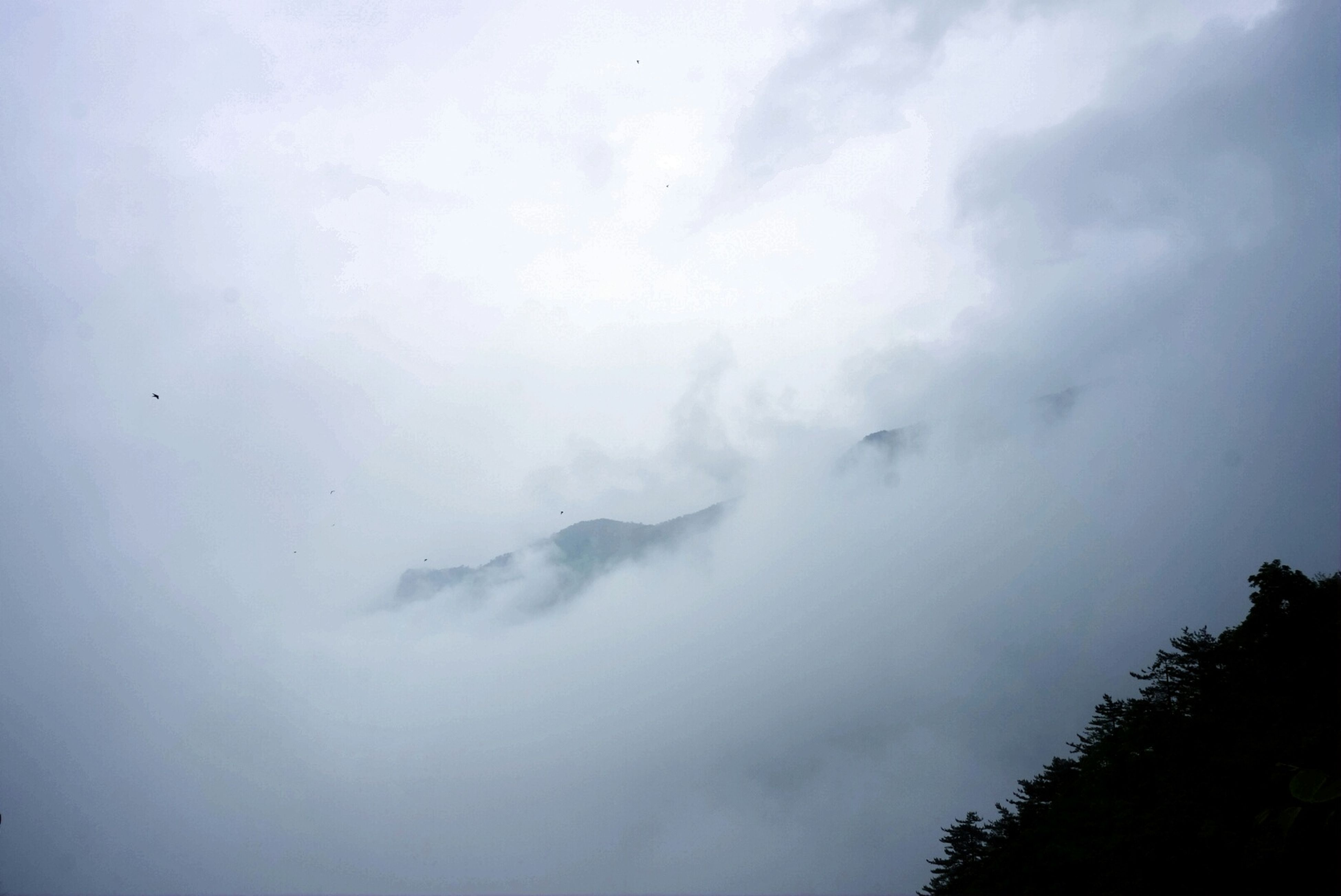 sky, weather, scenics, beauty in nature, cloud - sky, tranquility, tranquil scene, nature, cloudy, low angle view, tree, overcast, idyllic, cloud, fog, outdoors, no people, day, majestic, cloudscape