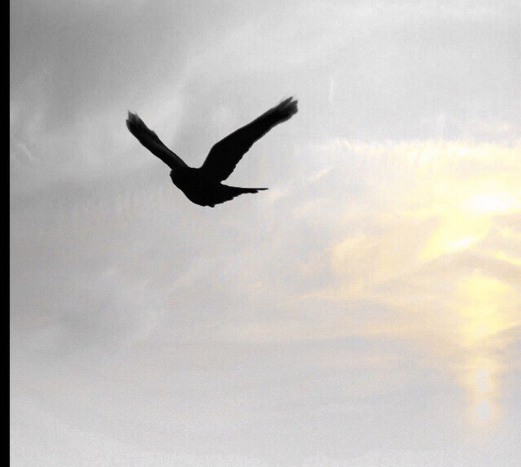 Flying high Bird Bird Photography Birdporn Skyporn Sky Taking Photos Outside For The Love Of Photography April 2016 My Unique Style Eye4photography  Edited My Way Eyeemphotography Edited By Me EyeEm Best Edits I Love Editing Pentax K-50 My Photography Camera Photo