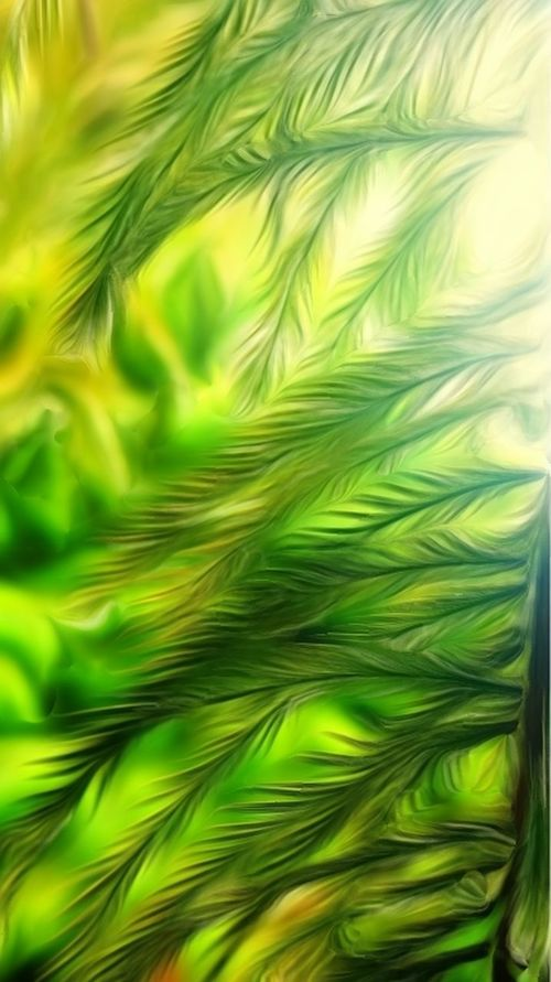 Green Color Close-up Nature Backgrounds Growth Tree Outdoors Freshness Abstract Nature Photography Tranquil Scene Leaves🌿