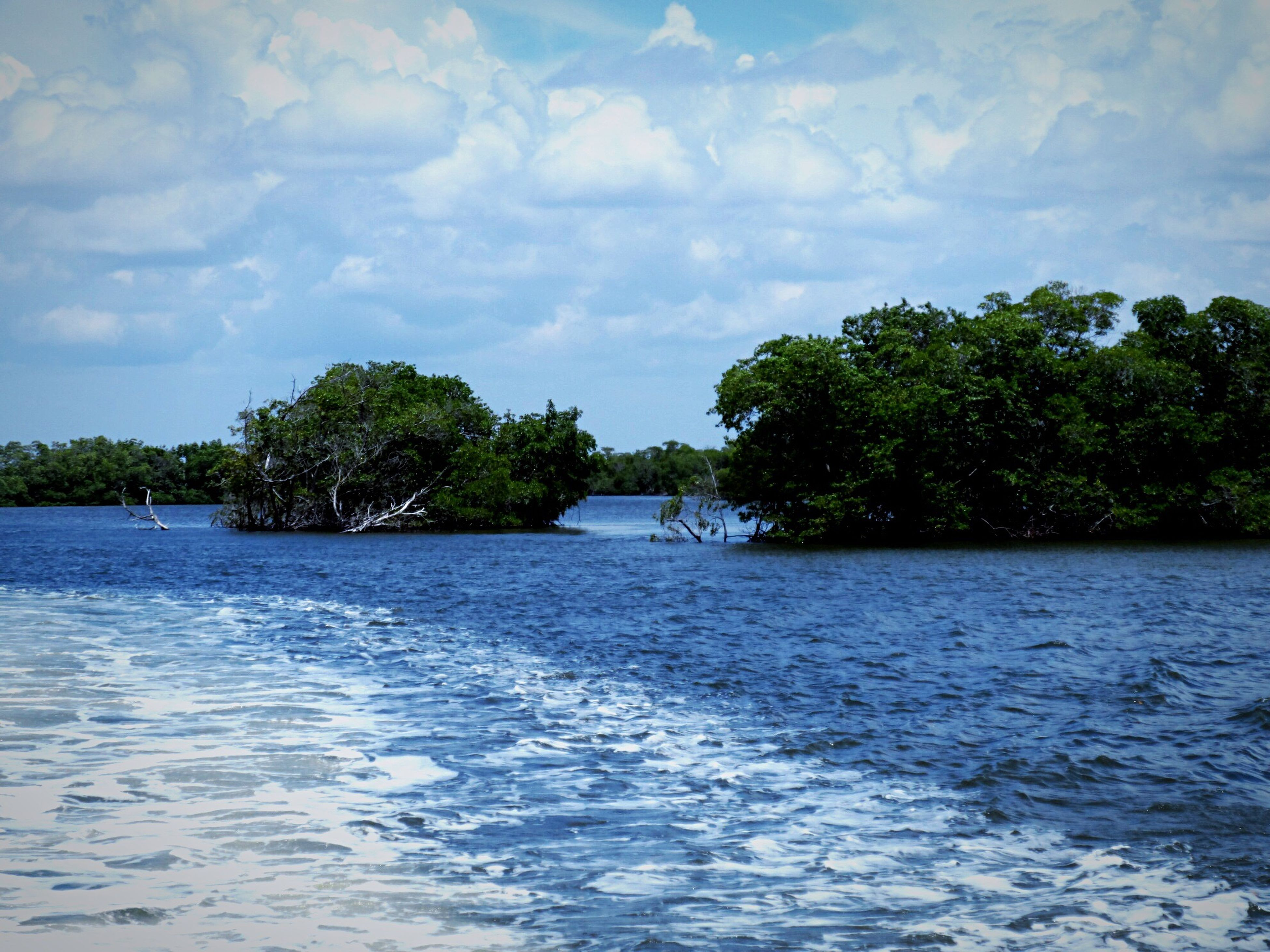 tree, water, sky, waterfront, cloud - sky, tranquil scene, tranquility, rippled, scenics, beauty in nature, cloud, nature, cloudy, river, lake, sea, day, idyllic, growth, outdoors