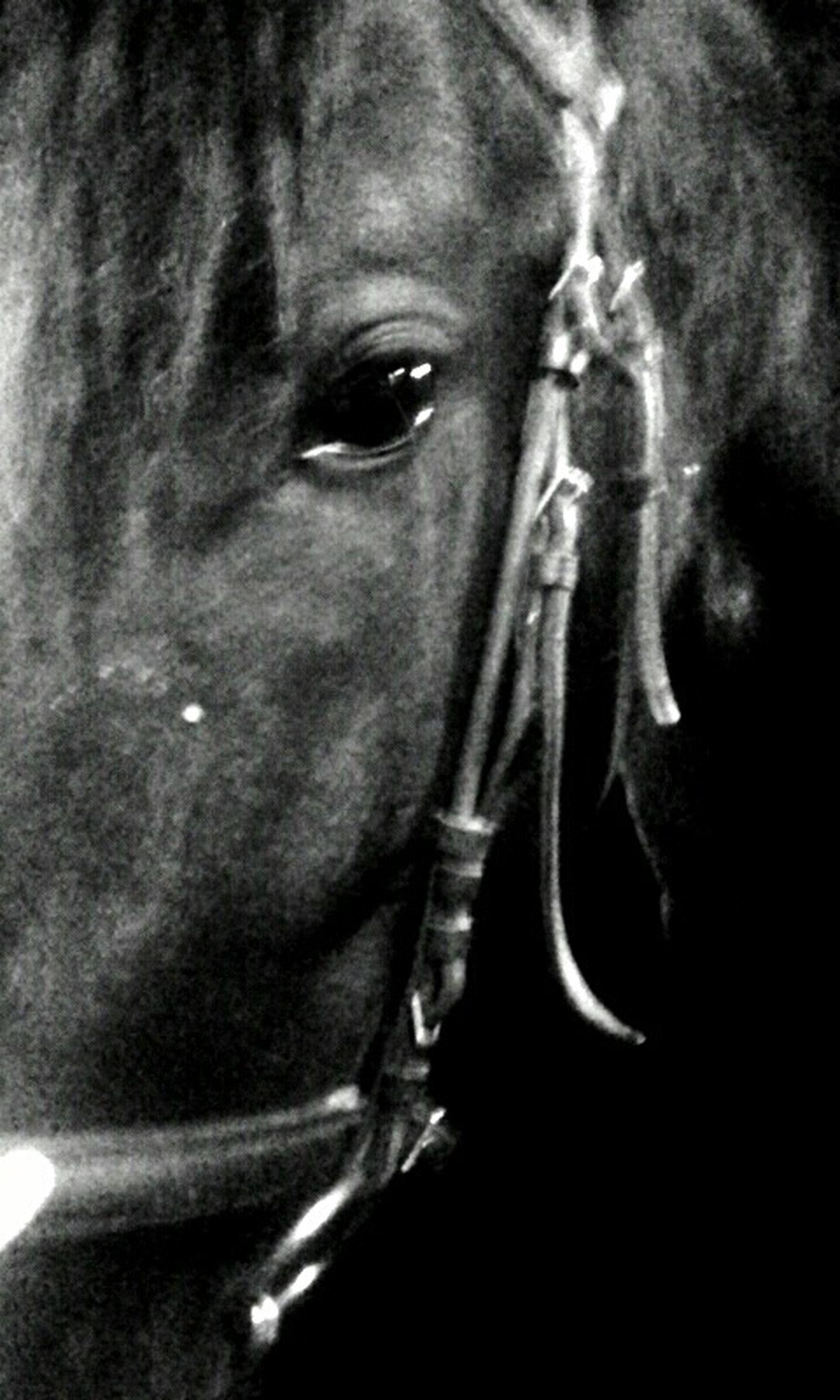 Pirmā reize iemauktos Horse Galanta