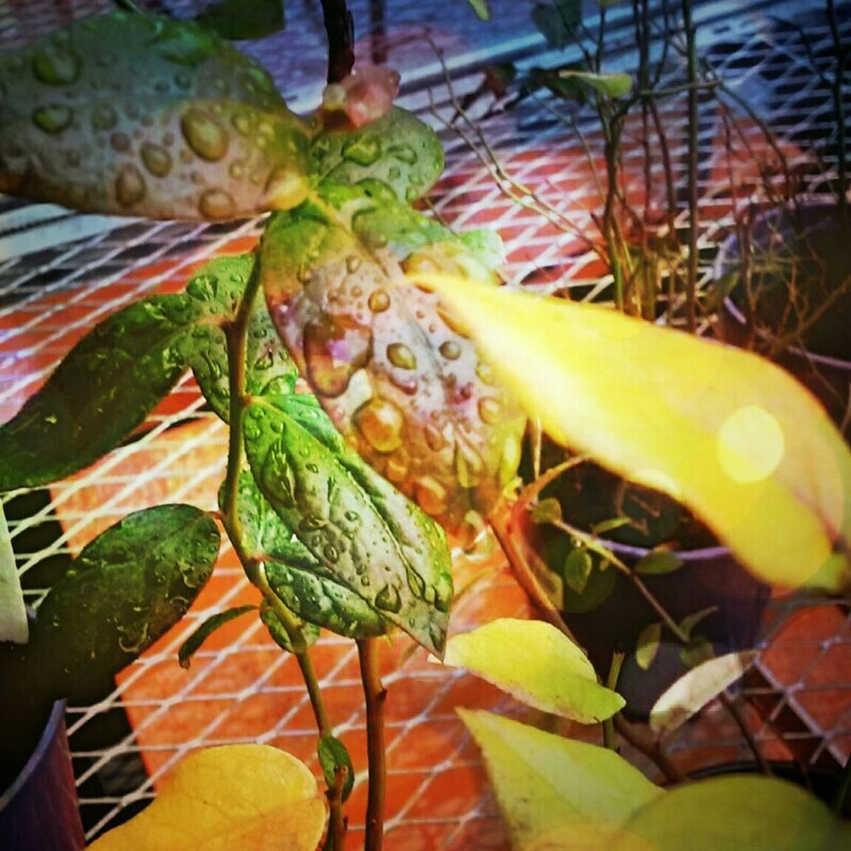 Fall Leaves Raindrops Lomography Andrography