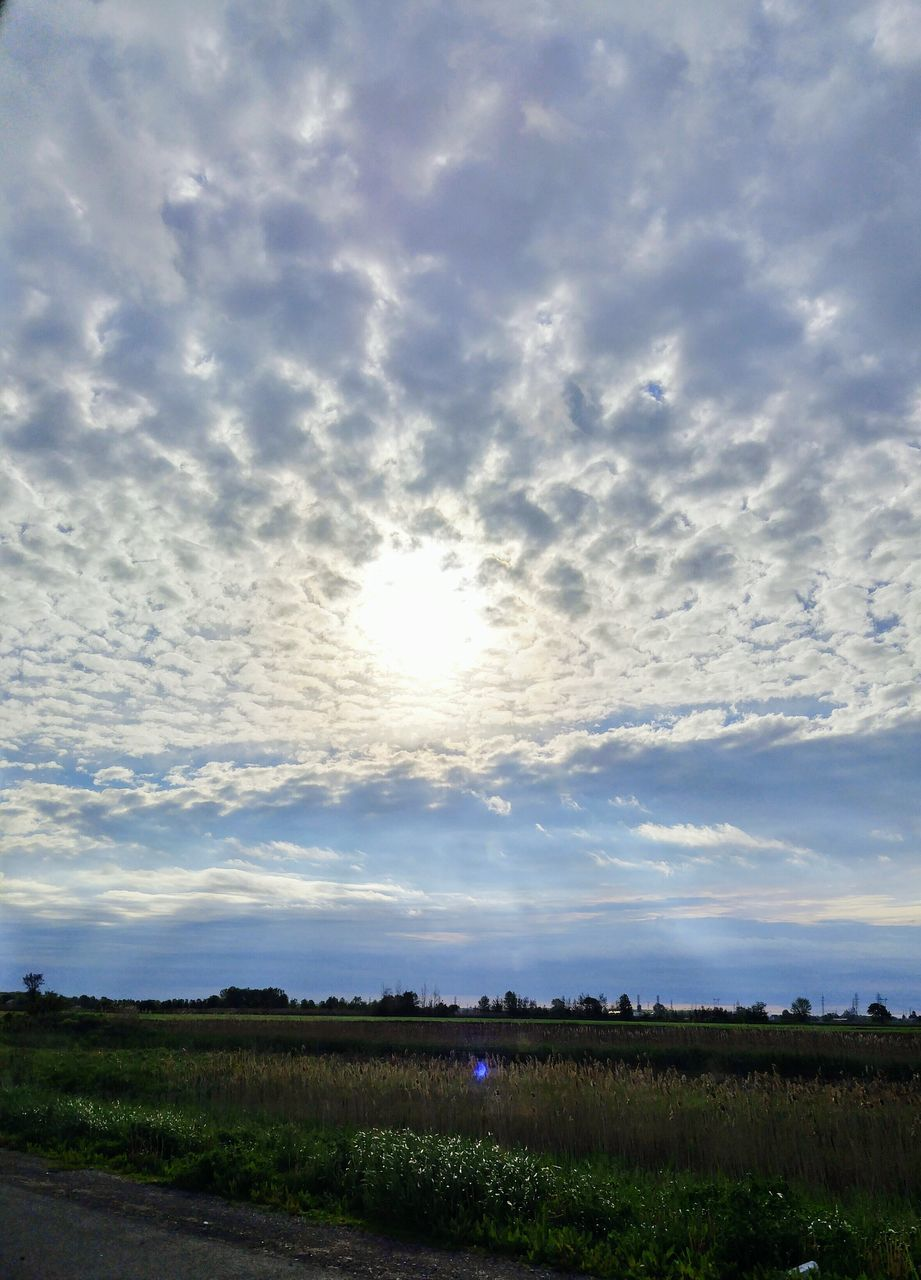 field, nature, cloud - sky, beauty in nature, landscape, tranquil scene, tranquility, agriculture, sky, rural scene, scenics, growth, outdoors, no people, day