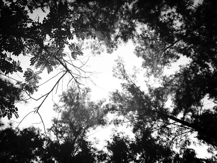 In The Forest Blackandwhite Nature_collection