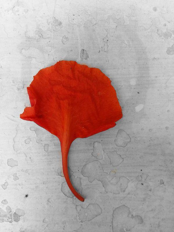 The 'Lord Ganesha' flower Nature Devotion And Love Flower God Ganesha Indian God Fine Art Photography
