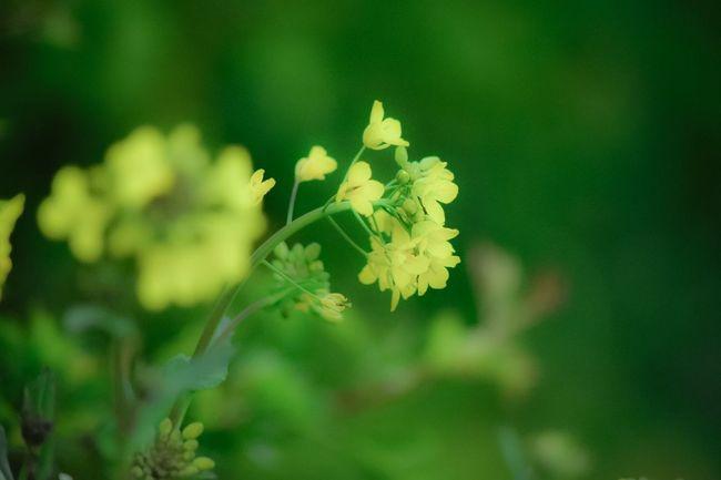 Flowers Nature Nature Photography Nikonphotography Nikon D7200