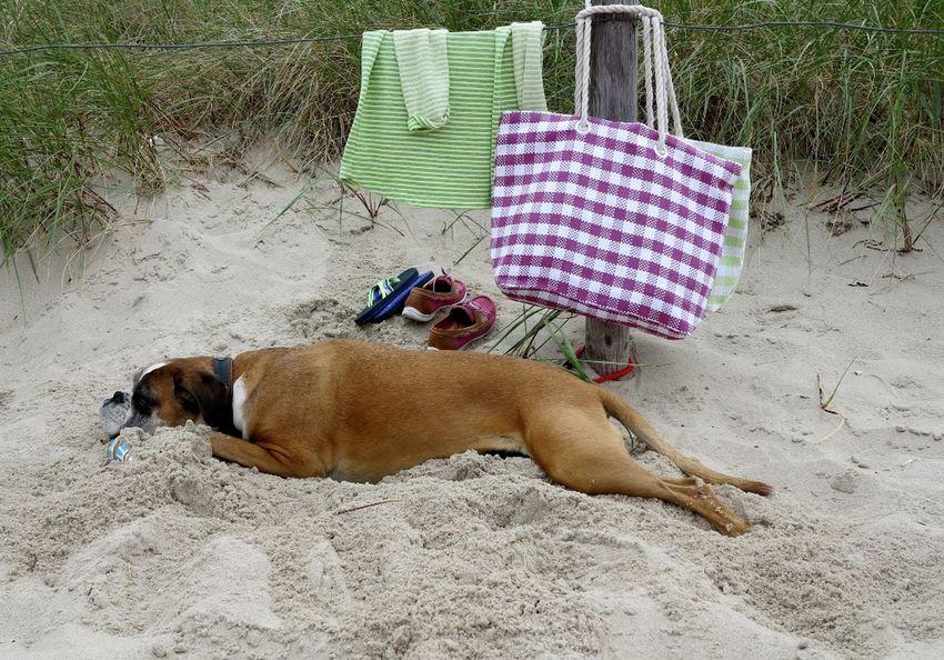 Am Hundestrand... 25 Days Of Summer Enjoying Life Dogs SweetLe
