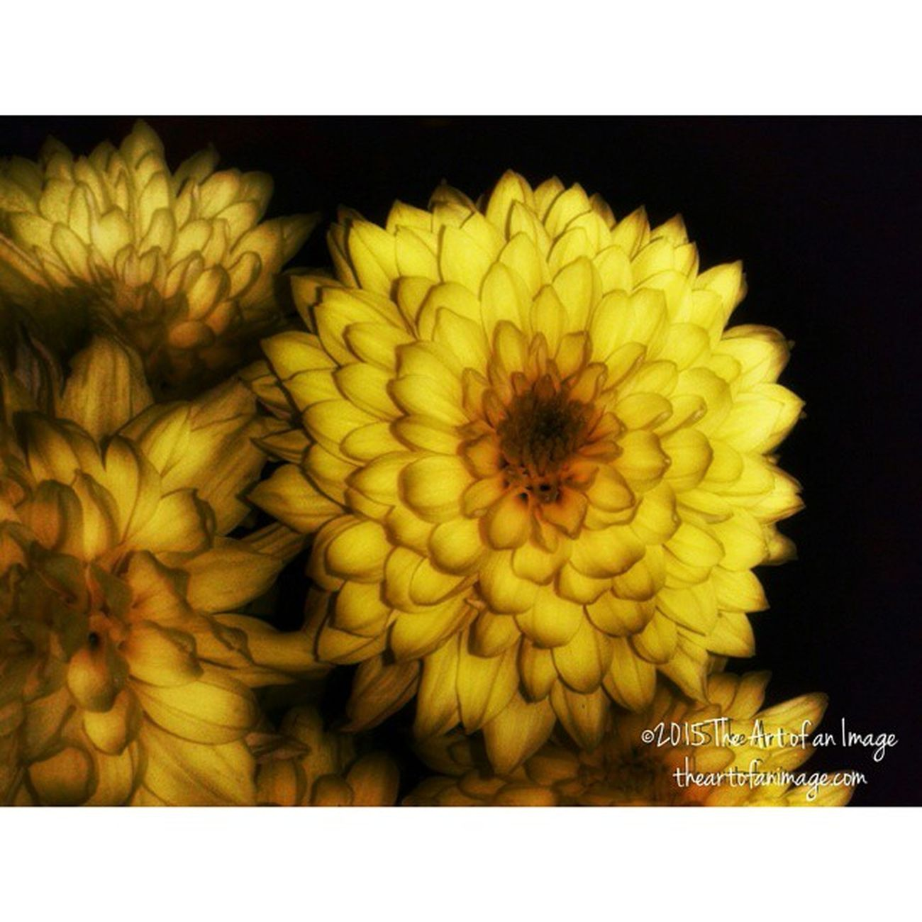"""Sun Glow"" May 2015 ☮ www.theartofanimage.com"