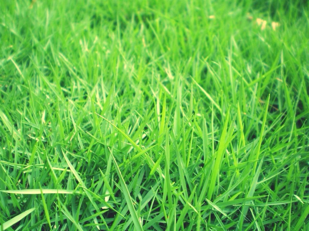 grass, green color, field, full frame, backgrounds, nature, no people, day, outdoors, close-up