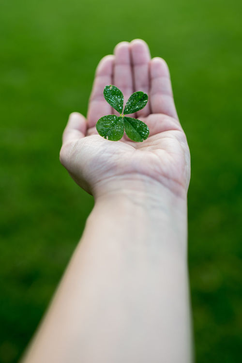 Clover Four Leaf Clover Four Leaf Clovers 🍀 Good Luck Green Color Greenery Hand Happiness Holding Holding Clover Human Hand Luck Luck Charm Lucky