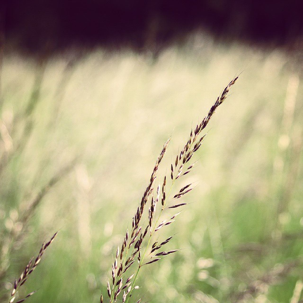 growth, nature, plant, focus on foreground, day, outdoors, tranquility, field, no people, beauty in nature, close-up