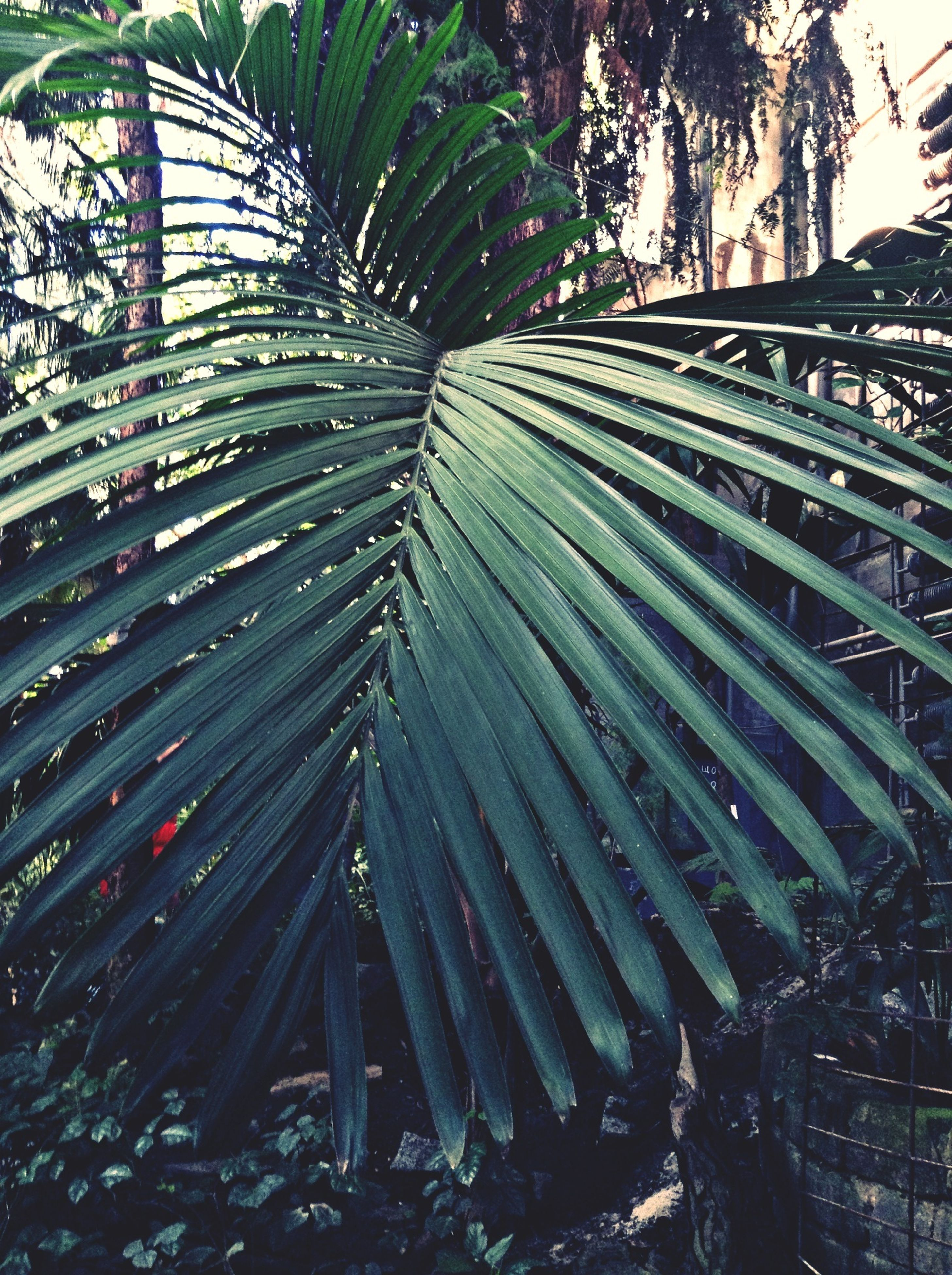 tree, growth, nature, low angle view, leaf, plant, outdoors, day, no people, branch, palm tree, tranquility, abundance, beauty in nature, high angle view, cactus, built structure, growing, pattern, tree trunk