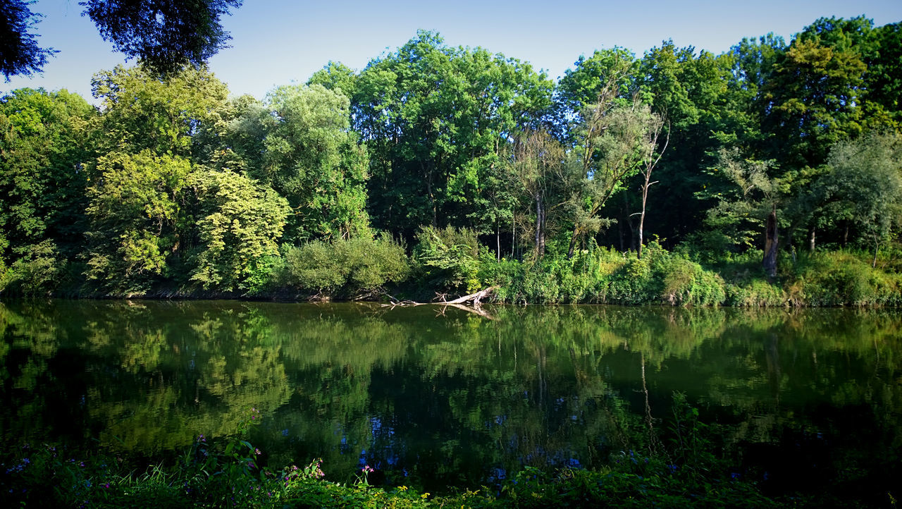 Panoramic summer view ot Isar river waterfront with calm waters flanked by trees, Bavaria, Germany. Bavaria Beauty In Nature Calm Water Countryside Day Germany Green Color Growth Isar Isar Valley Mirror Reflection Nature No People Outdoors Reflection Reflections In The Water River Sky Tranquility Tree Water Wilderness WoodLand