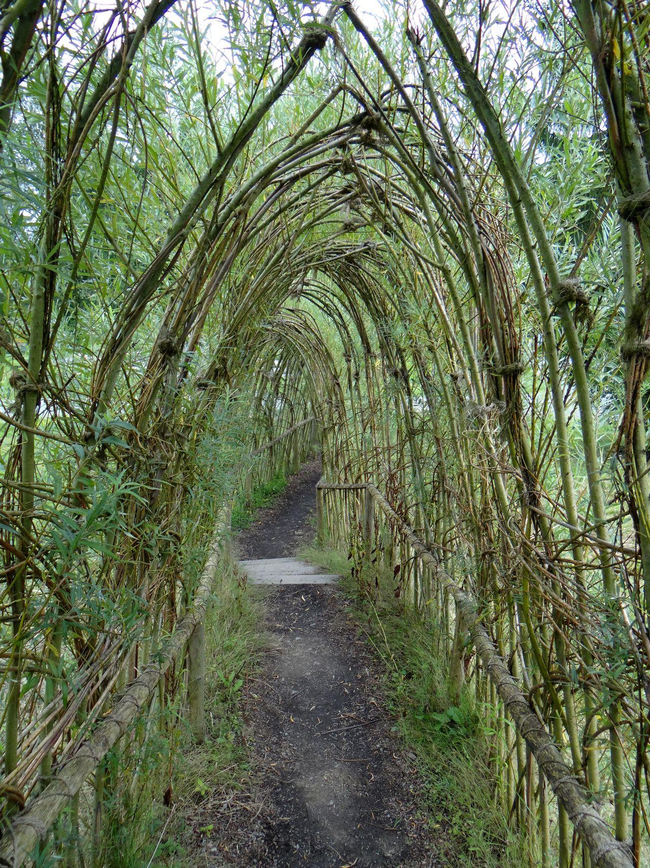 Weidentunnel auf Panarbora - sowas fehlt noch in meinem Garten! Green Architecture Day Forest Grass Growth Nature No People Outdoors Plant The Way Forward Tree Tunnel Walkway Willow Panarbora
