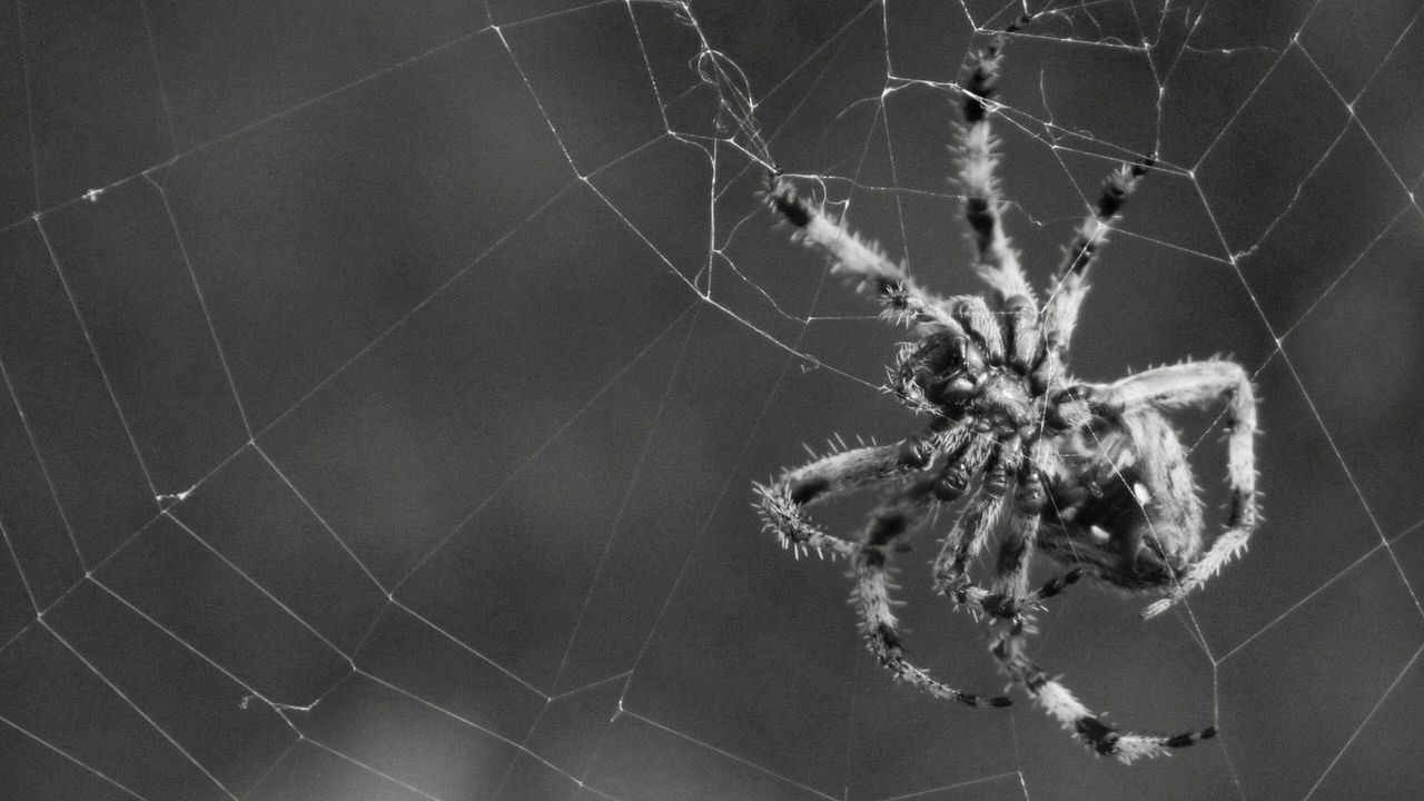spider, spider web, one animal, animal themes, animals in the wild, close-up, focus on foreground, web, no people, nature, day, insect, outdoors, animal leg, fragility