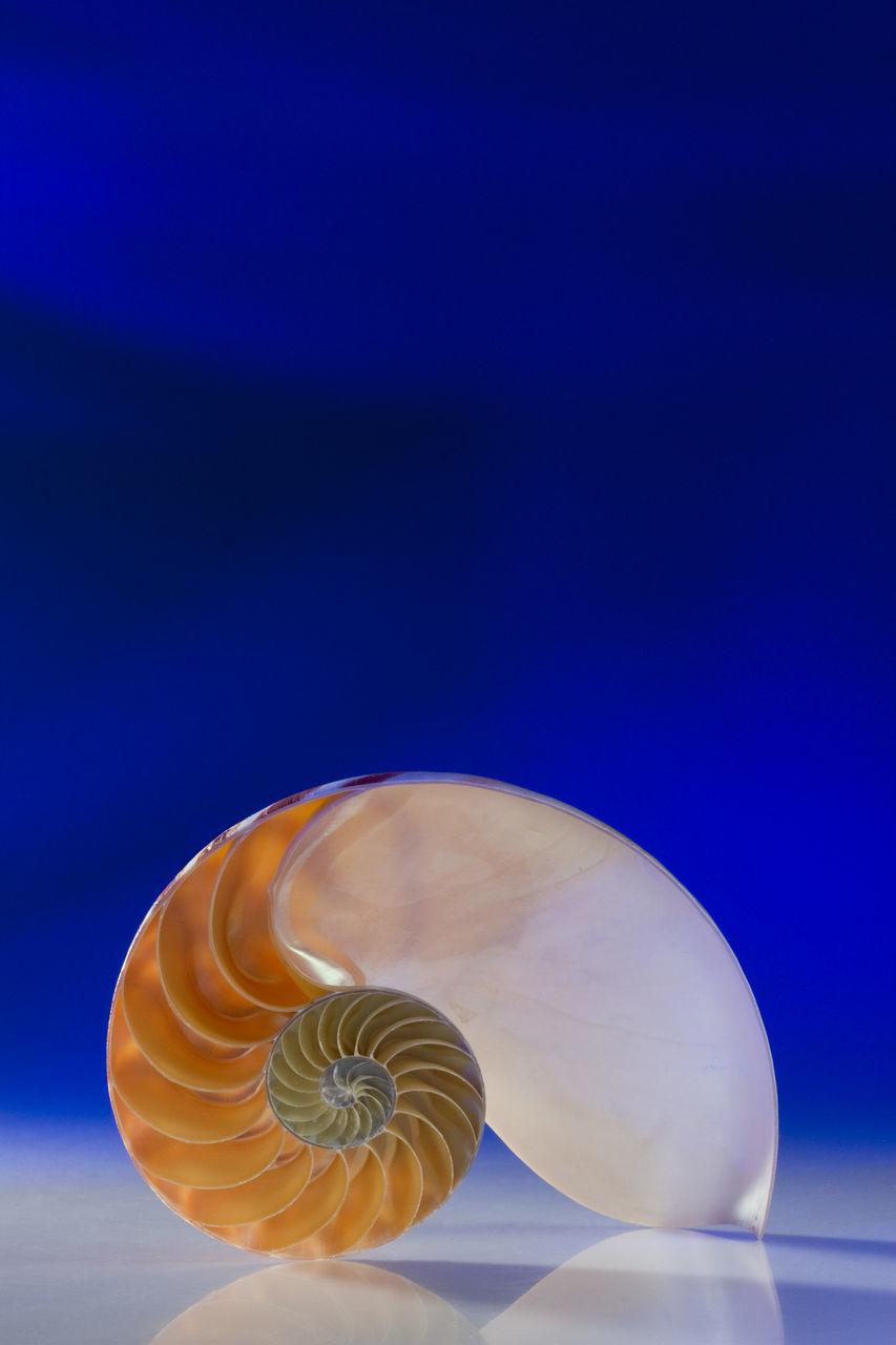 Close-Up Of Nautilus Shell On Blue Background