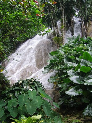 Beauty In Nature Day Flowing Water Forest Freshness Green Green Color Growth Jamaica Jamaican Leaf Lush Foliage Nature No People Outdoors Overgrown Plant Power In Nature Scenics Stream Tranquil Scene Tranquility Water Waterfall Waterfalls