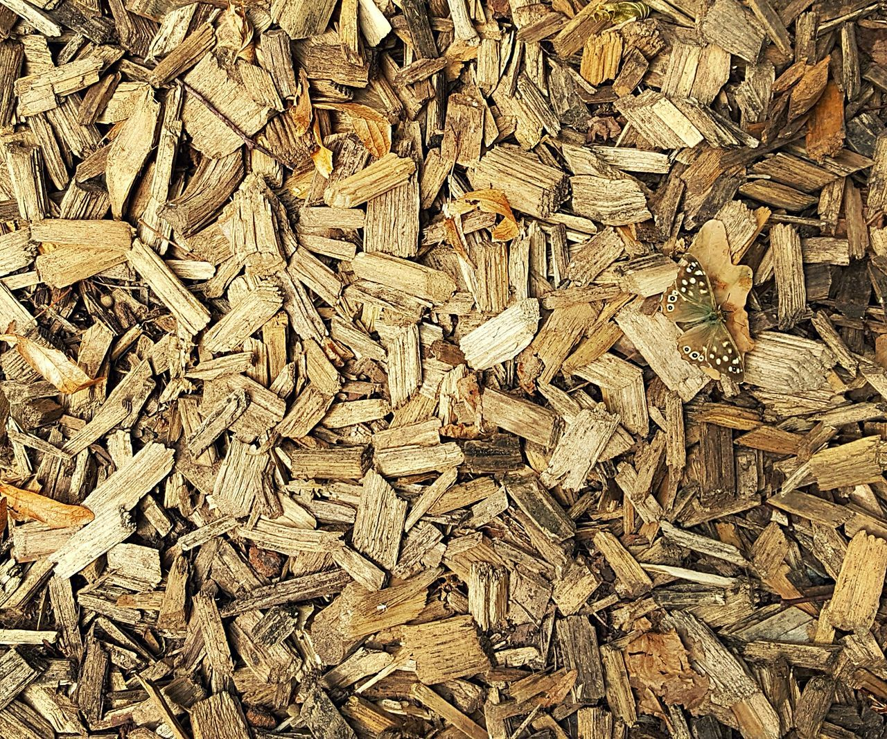 abundance, full frame, backgrounds, large group of objects, no people, lumber industry, day, close-up, outdoors