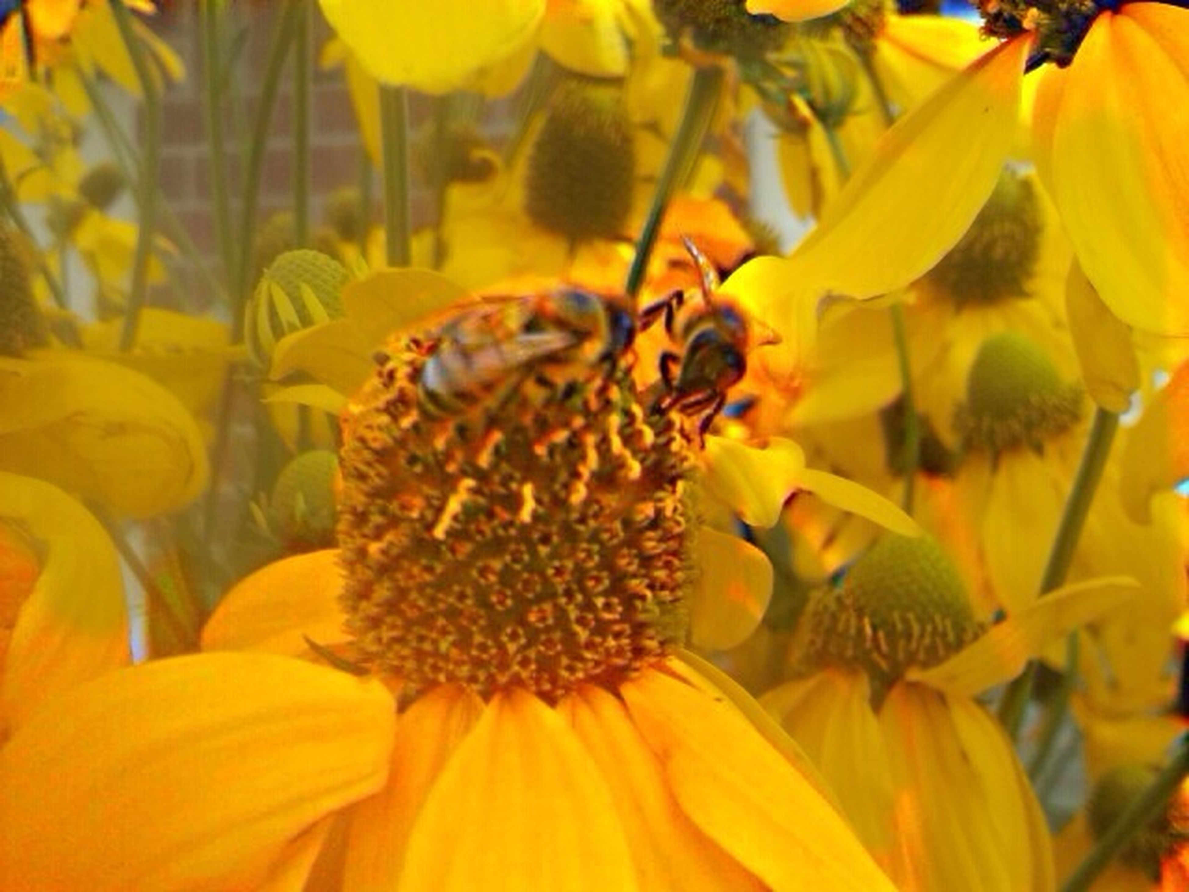 flower, animal themes, insect, petal, animals in the wild, one animal, wildlife, freshness, yellow, pollination, flower head, fragility, bee, close-up, beauty in nature, pollen, growth, nature, symbiotic relationship, honey bee