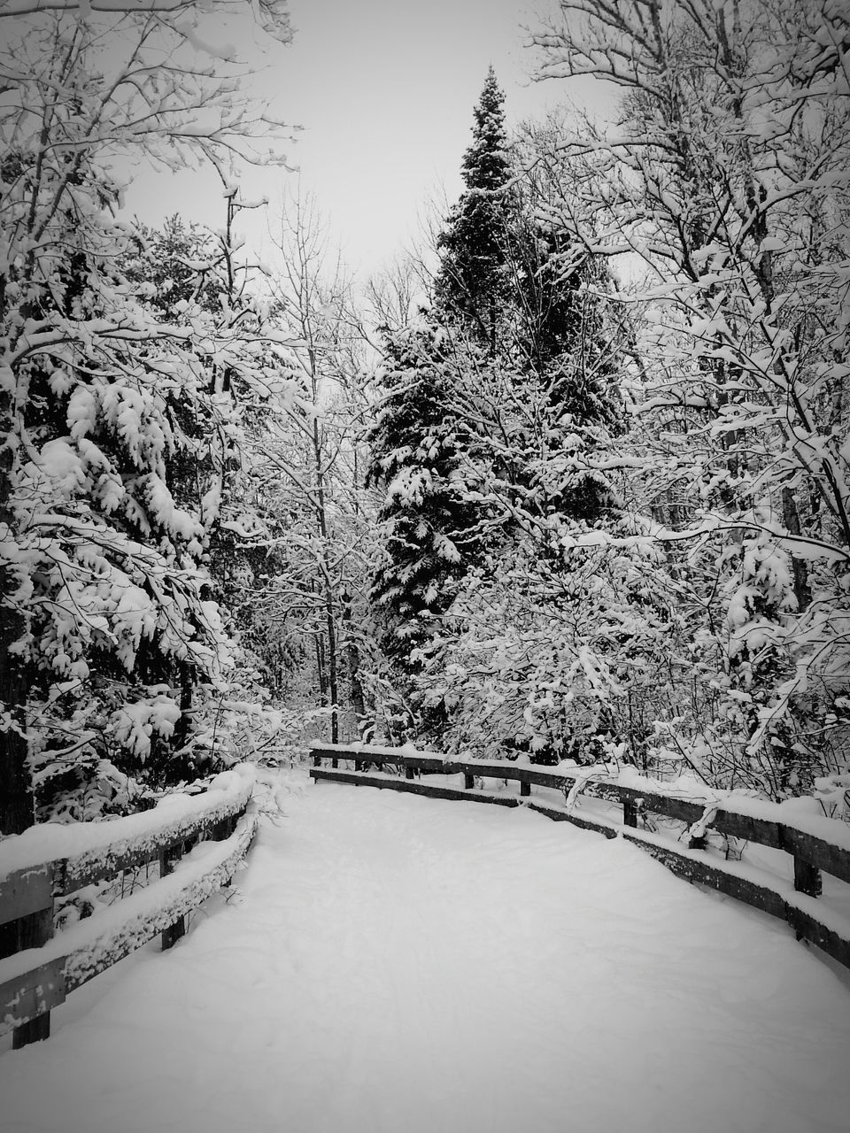 snow, cold temperature, winter, tree, nature, weather, beauty in nature, tranquil scene, tranquility, no people, scenics, outdoors, day, river, the way forward, forest, water, footbridge, sky