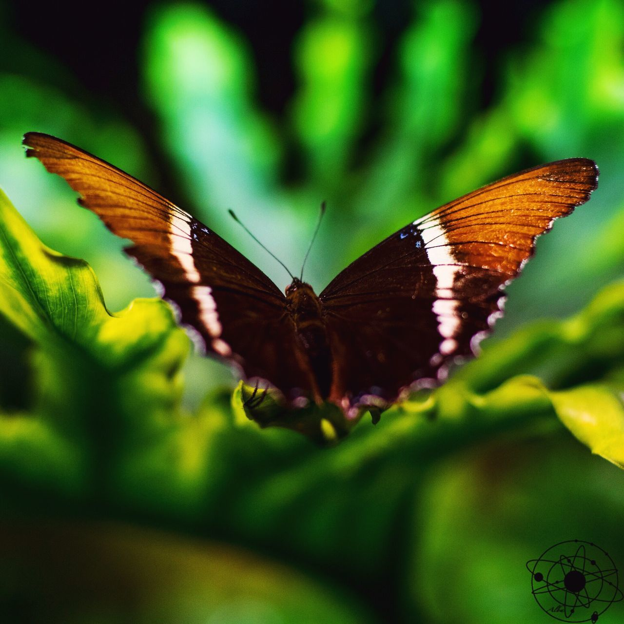 Butterfly - Insect Butterfly First Eyeem Photo Observatory Plant