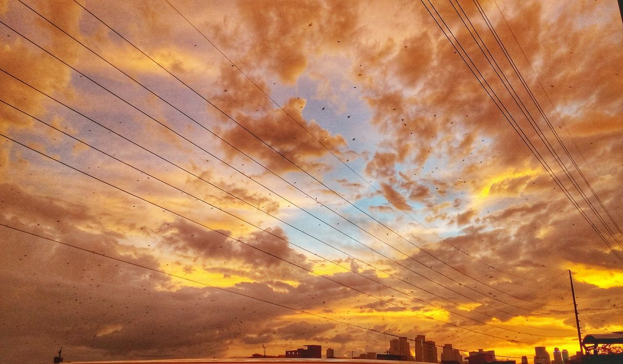 Bird Sunset Dramatic Sky Flying Outdoors Sky No People Beauty In Nature Cloud - Sky Scenics Day Nature Wires And Sky sunset #sun #clouds #skylovers #sky #nature #beautifulinnature #naturalbeauty photography landscape