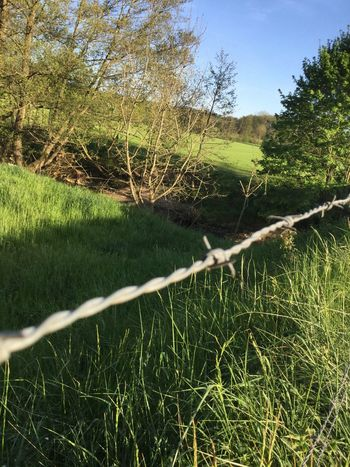 No People Tree Day Outdoors Tranquility Grass Tranquil Scene Nature Beauty In Nature Sky Close-up Barbed Wire River Germany