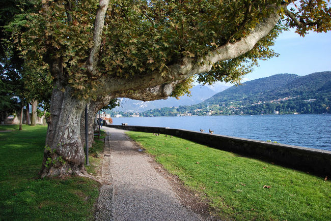 Teresio Olivelli public park - Tremezzina, Como, Lombardy, Italy. Como Italia Lario Lombardy Travel Tremezzo Beauty In Nature Europe Grass Italy Lake Landscape Lombardia Mountain Nature Old Outdoors Scenics Sky Tourism Tranquil Scene Tranquility Tree Tremezzina Water
