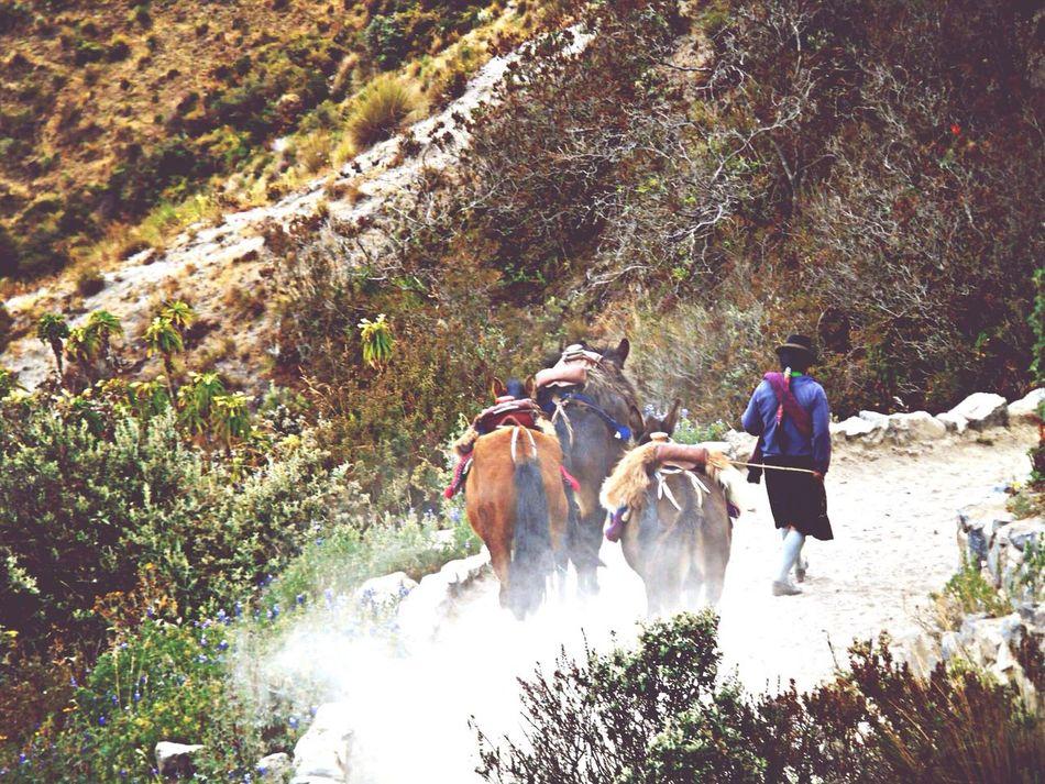 All You Need Is Ecuador Taking Photos Travel Photography Photography Holidays Laguna Quilotoa Mountains