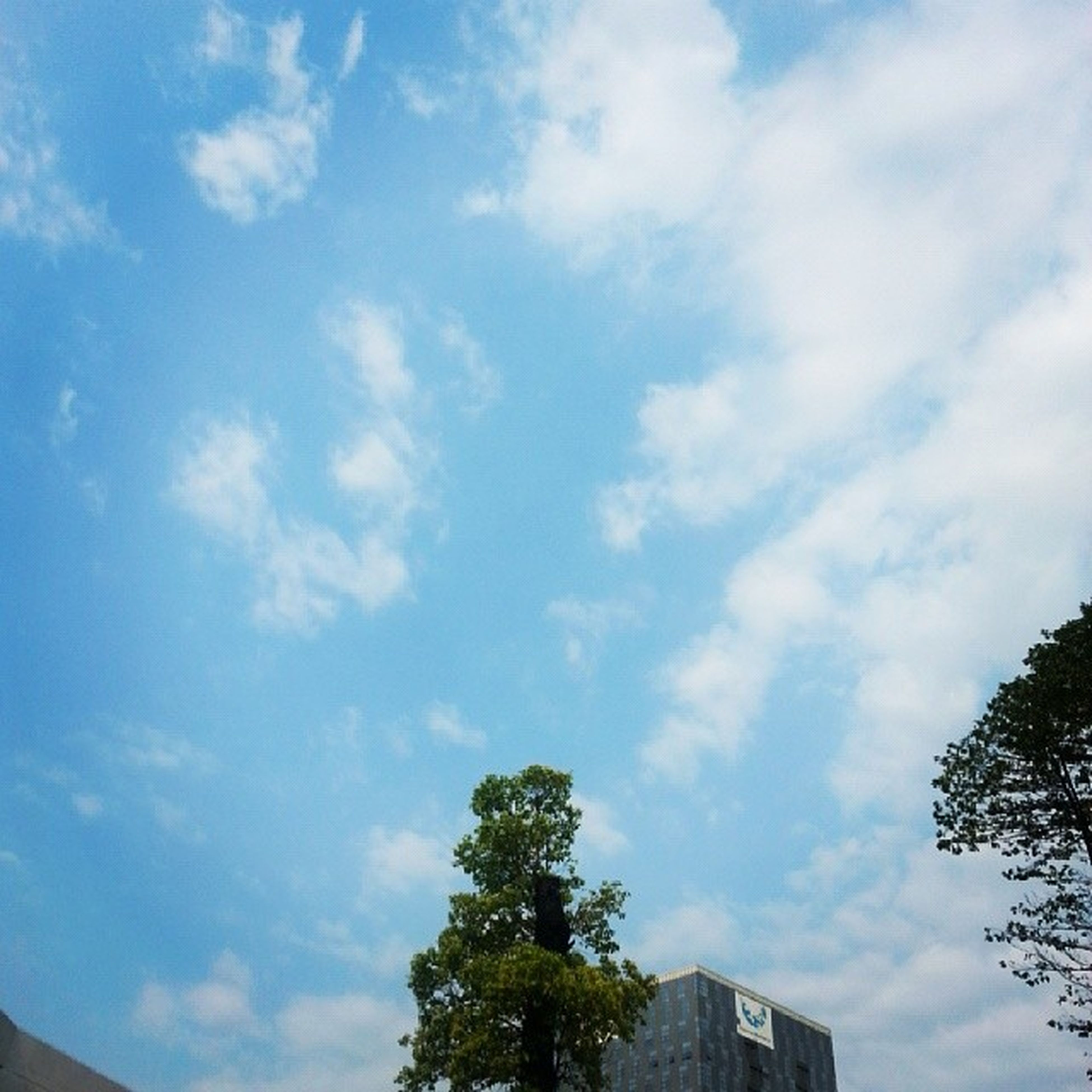 low angle view, tree, sky, cloud - sky, built structure, blue, architecture, building exterior, cloud, growth, high section, nature, cloudy, beauty in nature, day, outdoors, no people, tranquility, treetop, branch