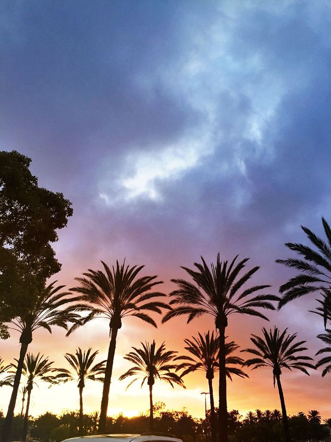 Only in California- Sunset California Sun Colors Palm Trees Trees Trees And Sky Sky Clouds And Sky Peace Lookingup Afternoon Horizon Outside Earth Beautiful Purple Yellow City