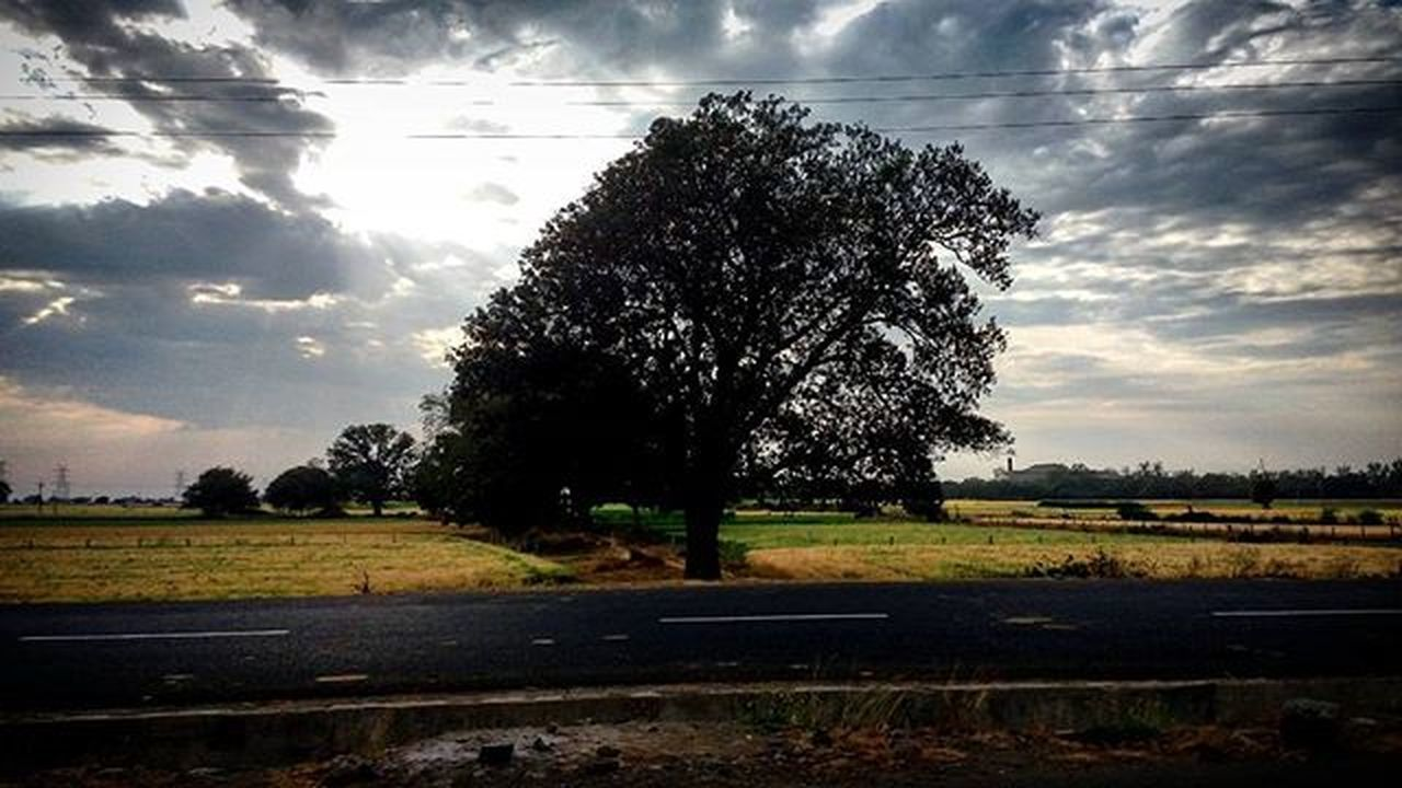 Landscape love ♡♡ Tree Clouds Sky Sharpness Road Road Trip Field Wires Grass Indore_bhopal Indore_city Indorelove Road_trip_love Highway_of_india Streets_of_india Streetphotographyindia Photographersofindia Streetshot Nature Greenery