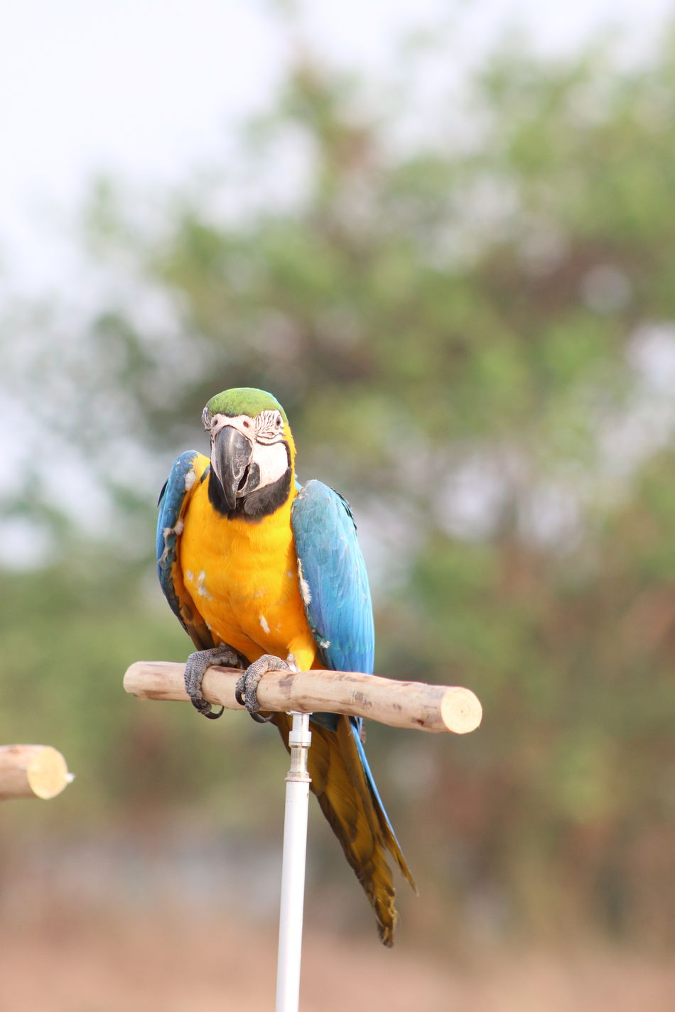 Macaw Macaw Parrot macaw Parrot
